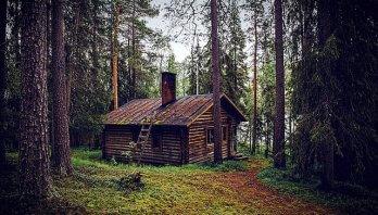 chatka w lesie